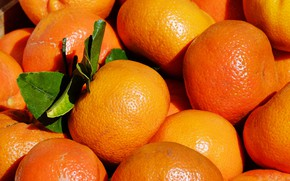 Picture orange, citrus, Tangerines