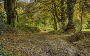 Picture Road, Trees, Forest