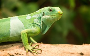Picture nature, lizard, trunk, green
