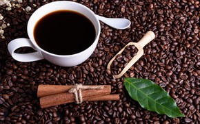 Picture Coffee, coffee beans, Sheet, blade
