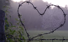 Wallpaper Valentine's day, metal, Rosa, web, nettle, the fence, wire, love, hole, fog, Valentine's day, background, ...