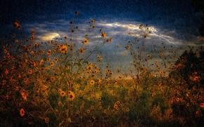 Wallpaper rain, field, the storm, summer