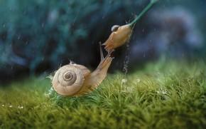 Picture flower, grass, drops, macro, rain, snail