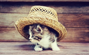 Wallpaper hat, Board, kittens, cute, kitty, cat, hat