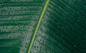 Picture drops, macro, squirt, nature, sheet, green, veins