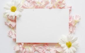 Picture flowers, chamomile, petals, paper, petals, chamomiles