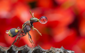 Picture drops, Rosa, OSA, insect