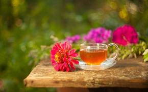 Picture flowers, tea, drink, zinnia