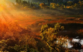 Picture nature, morning, rays of light