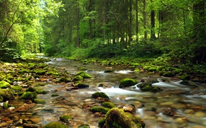 Picture Nature, Stream, Forest, Summer, Stones, Nature, River, Summer, River, Forest