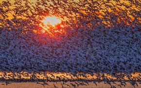 Picture the sun, birds, dawn, flight, geese