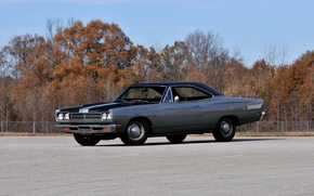 Picture asphalt, trees, muscle car, Plymouth, handsome., Plymouth Road Runner, grey colour