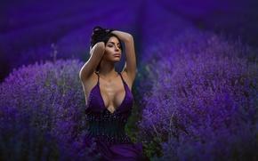 Picture field, chest, dress, neckline, sponge, lavender, purple