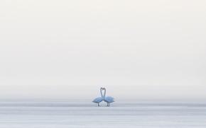 Wallpaper swans, birds, fog