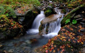 Picture forest, Stream, Waterfall, Autumn, River, Leaves