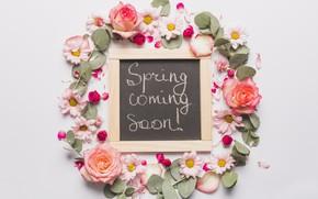 Picture Petals, Roses, Board, Chrysanthemum