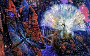 Picture forest, collage, dragonfly, art, peacock