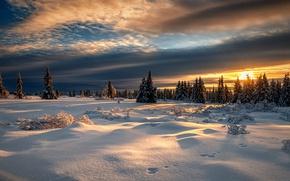 Wallpaper sunset, forest, Norway, Lillehammer, Lillehammer, Norway, winter, snow