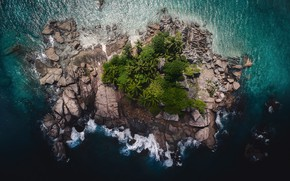 Picture forest, trees, stones, palm trees, rocks, island, the view from the top
