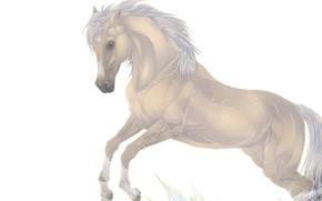 Picture horse, horse, mane
