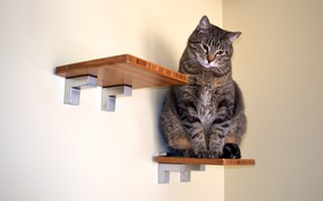 Picture cat, cat, look, grey, wall, shelf, figurine, sitting, striped, Kote, thick, shelves, chubby