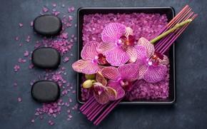Picture flowers, branch, Orchid, sea salt