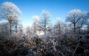 Picture winter, frost, forest