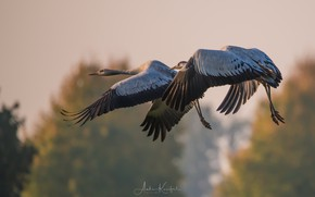 Picture the sky, birds, flight