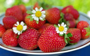 Wallpaper summer, flowers, nature, berries, chamomile, beauty, positive, harvest, strawberry, dessert, vitamins, cottage, treat, July, red, ...