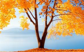 Picture autumn, leaves, lake, tree, mountain