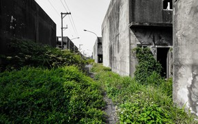 Picture greens, grass, the city, street, home, abandoned