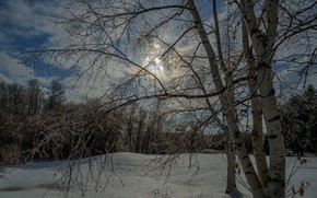 Picture winter, forest, trees, the evening