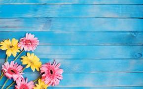 Wallpaper flowers, pink, gerbera, yellow