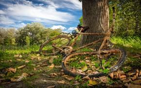 Wallpaper nature, bike, tree