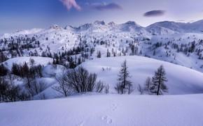 Picture winter, snow, trees, mountains, traces, plateau, Slovenia, Slovenia, The Julian Alps, Julian Alps, Komna Plateau