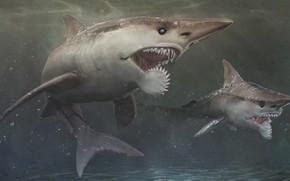 Picture teeth, Depth, Shark, Mako, Skin, teeth, Mako, Depth, by Shake It Off, Helicoprion