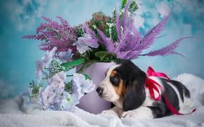 Picture flowers, dog, bucket, puppy, blue background