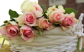 Picture leaves, flowers, house, background, rose, roses, bouquet, petals, fabric, gentle, pink, basket, buds, composition