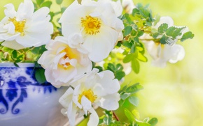 Picture petals, briar, white rose