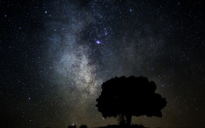 Picture space, stars, tree, the milky way