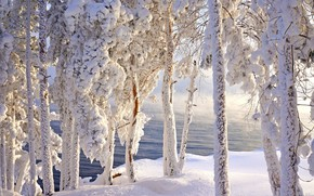 Picture frost, snow, frost, Siberia