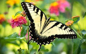 Picture flowers, butterfly, beautiful