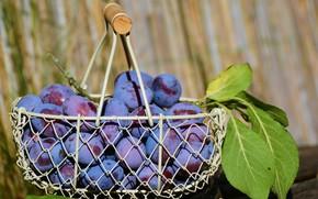 Picture Basket, fruit, Plum