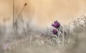 Picture nature, spring, flowers