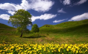 Picture greens, grass, clouds, the steppe, heat, tree, hills, spring, may, wildflowers