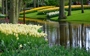 Picture greens, grass, trees, flowers, pond, Park, tulips, Netherlands, Keukenhof