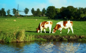 Picture greens, field, summer, trees, landscape, pond, river, shore, sheep, spring, cows, pasture, meadow, mill, sheep, ...