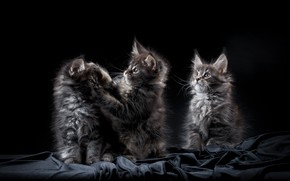 Picture background, Kids, Maine Coon, Kitties