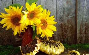 Picture sunflowers, still life, seeds