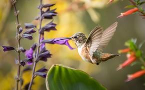 Picture bird, feathers, beak, Hummingbird, color, feathers